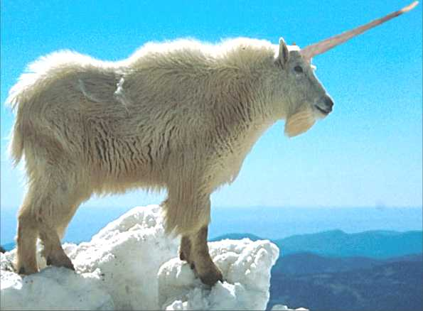 Picture link game. - Page 6 Goat___Mountain___Working_Model___Single_Horn